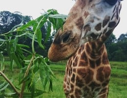 Luxury Safari in Kent: A Stay at Port Lympne Animal Reserve