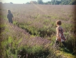 Lavender fields UK: We found the best one!