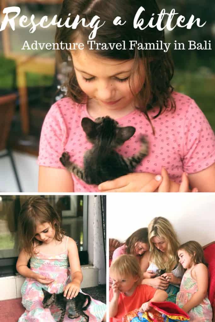 bali animals, bali travel blog, bali with kids, villa kitty