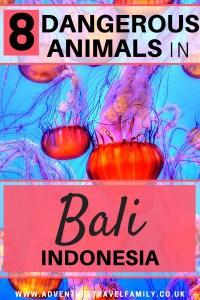 bali dangerous animals jellyfish