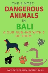 dangerous bali animals