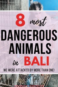 dangerous animals in bali wildlife