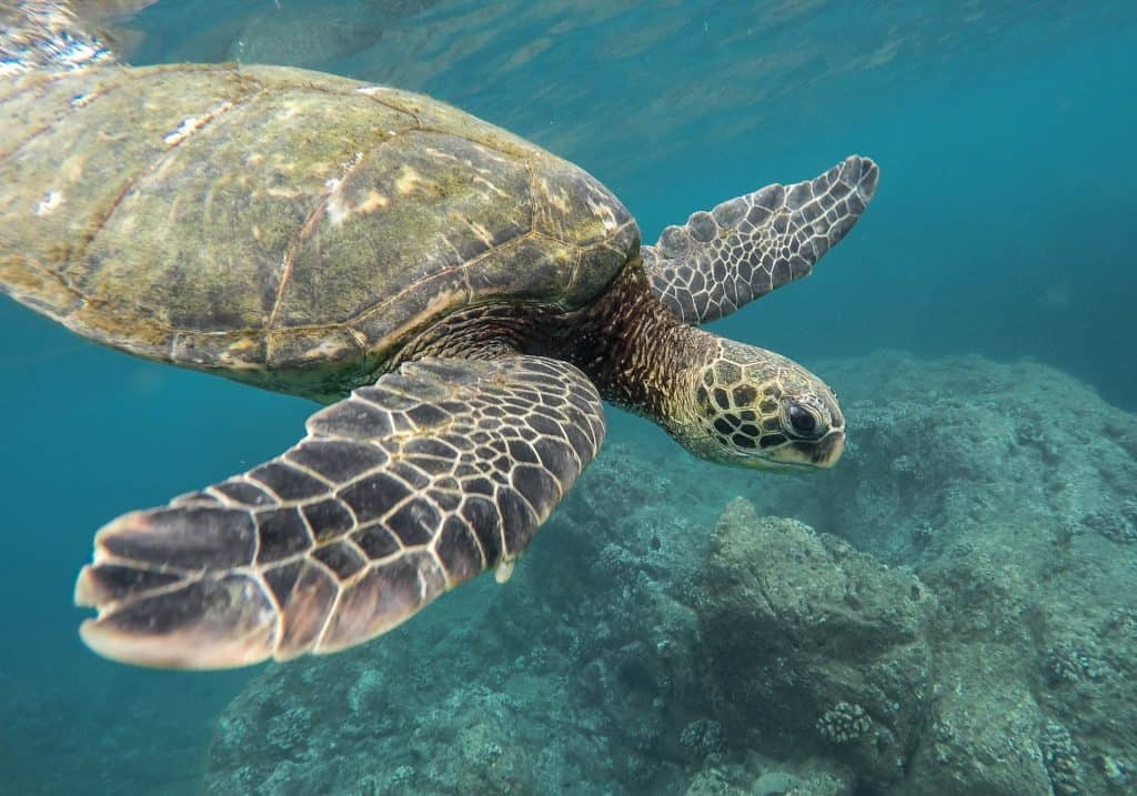 Swimming with turtles in Sri Lanka: All you need to know