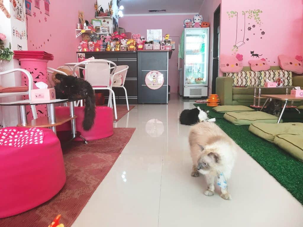 cat cafe, cat cafe near me