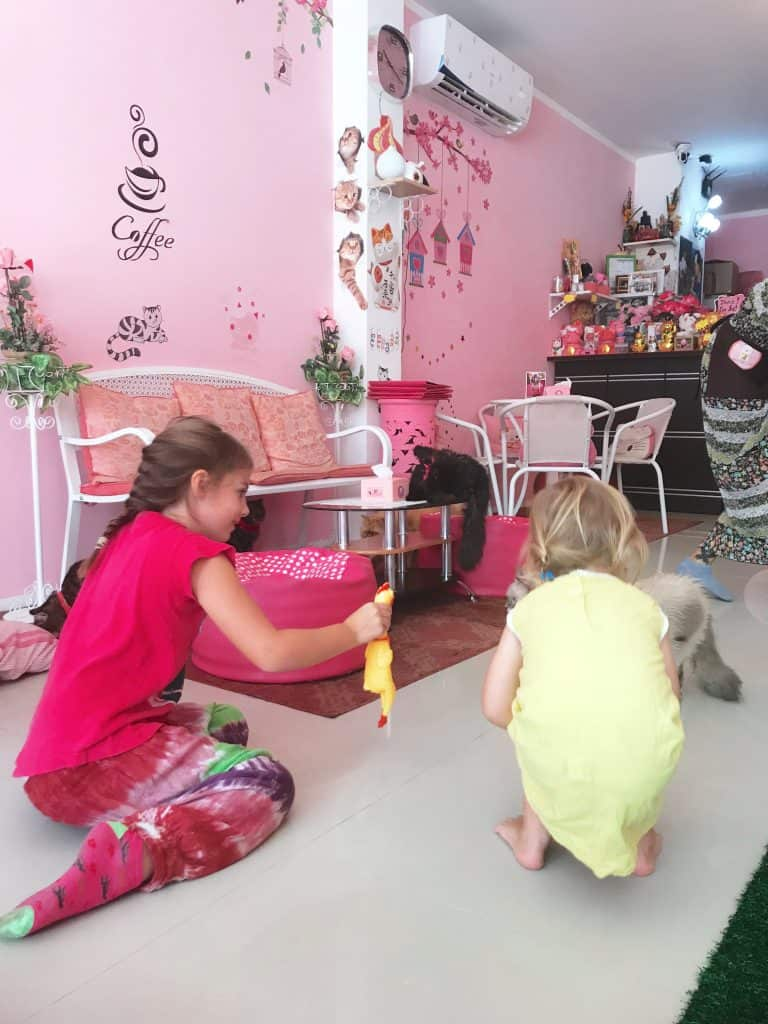 cat cafe, cat cafe near me, things to do phuket, cat cafe phuket