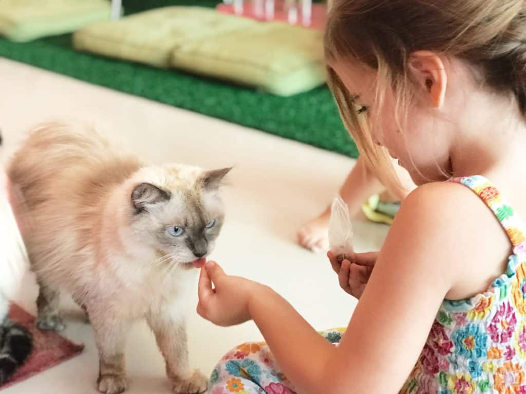 cat cafe, cat cafe thailand