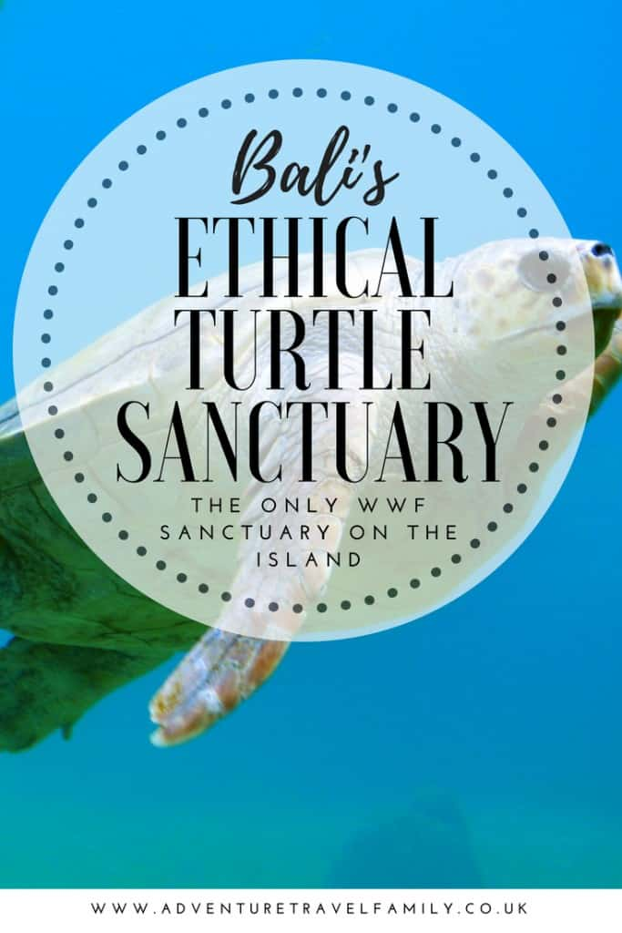 turtle sanctuary bali, turtle sanctuary, bali turtles