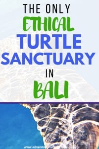 ethical turtle sanctuary bali