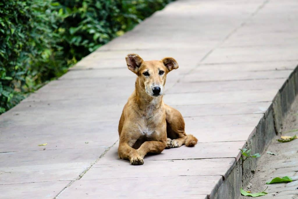 THREE dog attacks in 6 months: Our experience in South East Asia