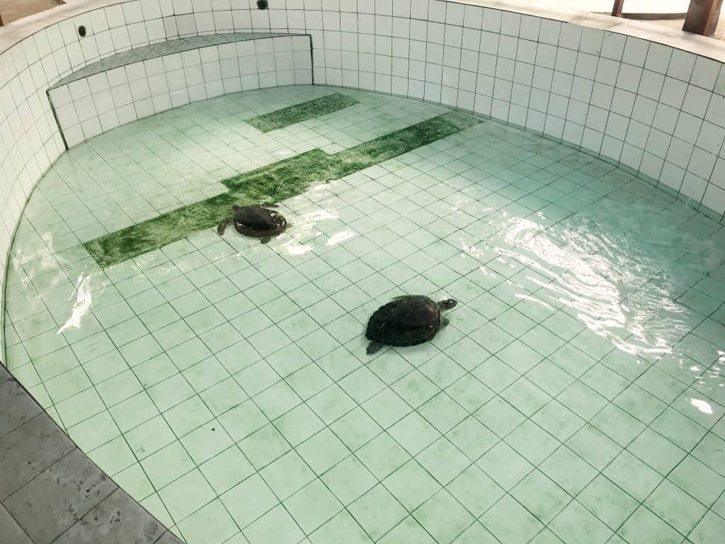 turtles bali, serangan harbour bali