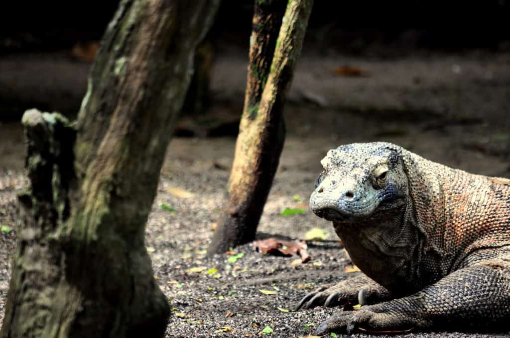 best time to visit komodo island
