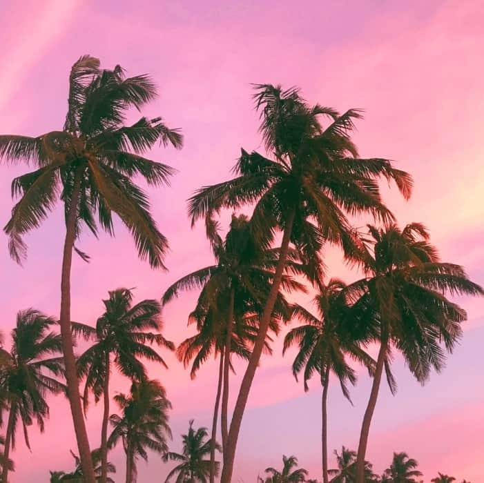 Sri lanka palm trees at sunset