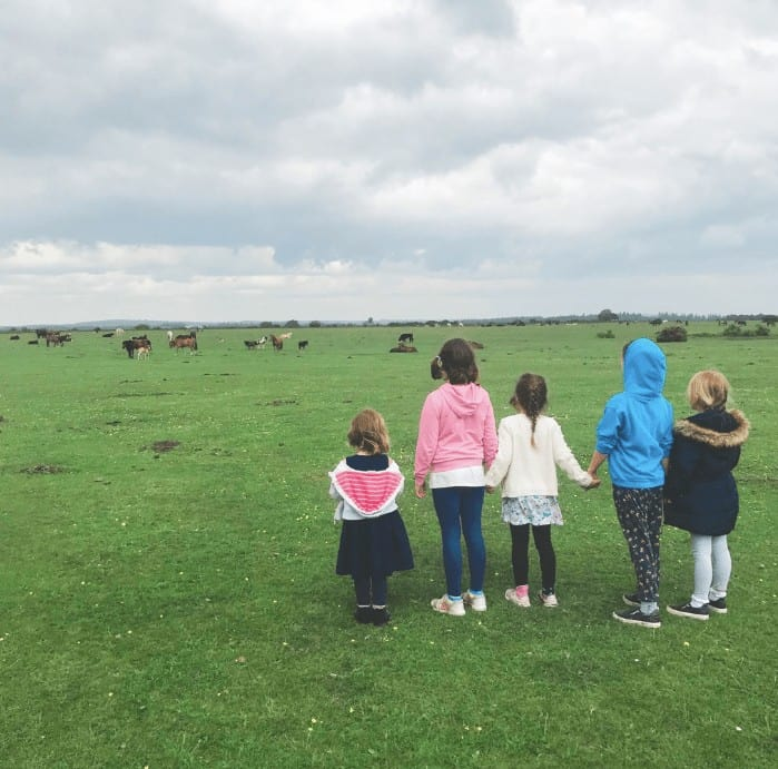 things to do in the new forest- new forest ponies