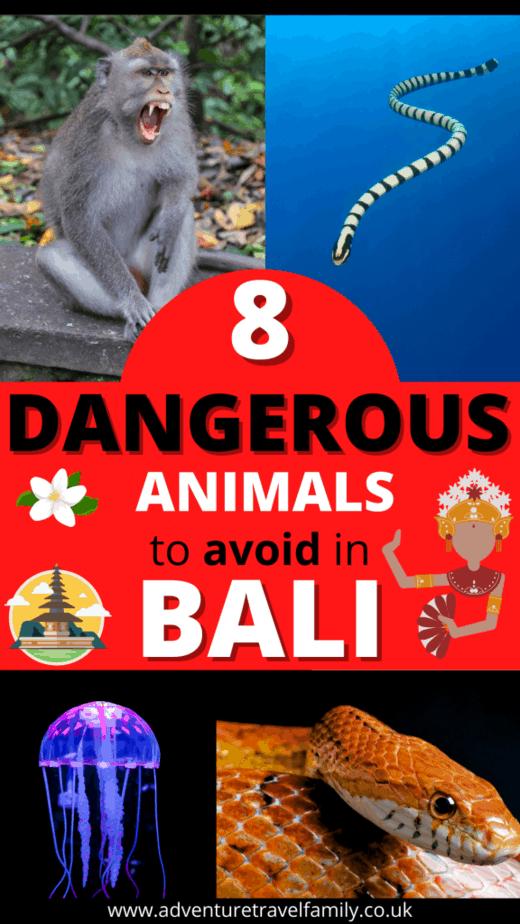 dangerous bali animals jellyfish sea snake monkey
