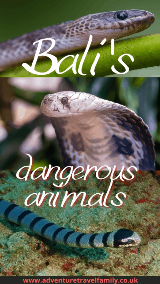 bali snakes, the king cobra and sea snake